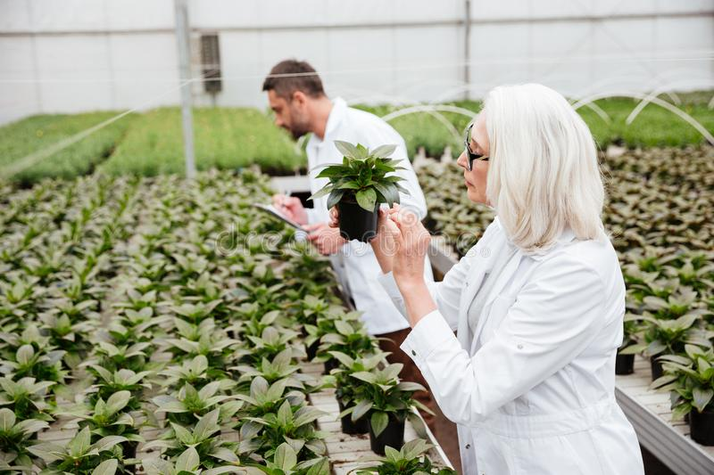 Side view of woman and man working with plants in garden stock photo