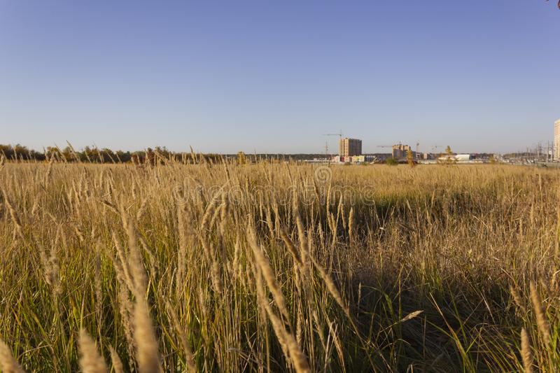 Side view of a yellow grassland with unfinished buildings at the background stock images