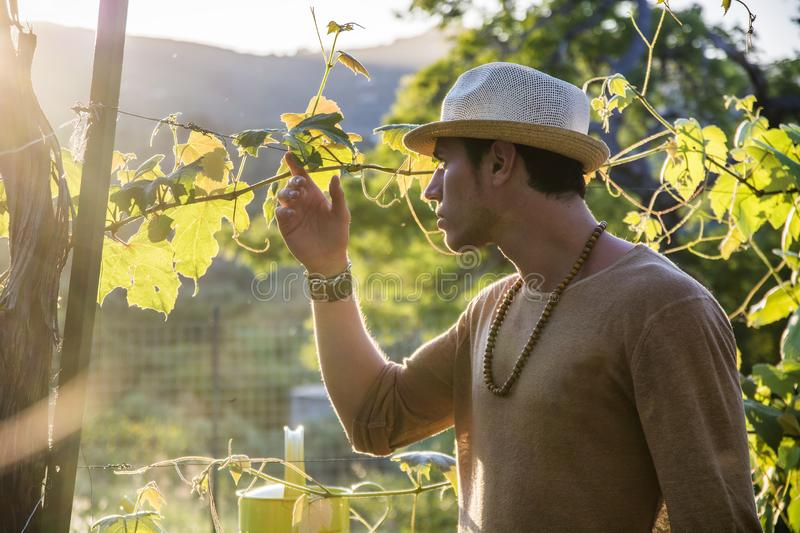 Side view of young man in hat looking at vine leaves stock photography