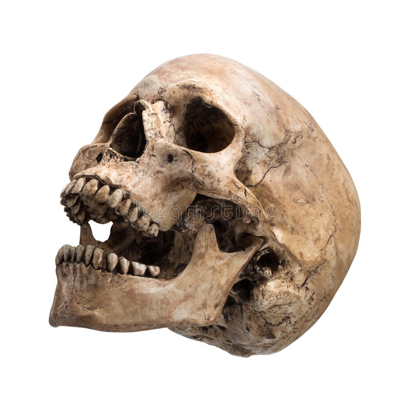 Free Sidetview Human Skull Open Mouth Isolated Stock Images - 40765794