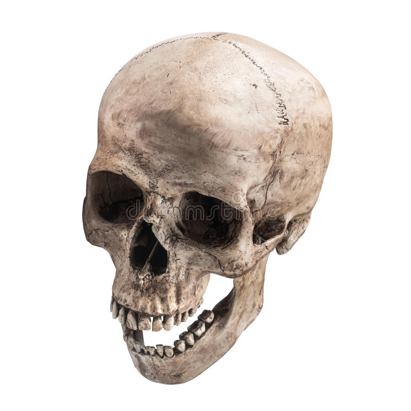 Sidetview human skull open mouth isolated stock image