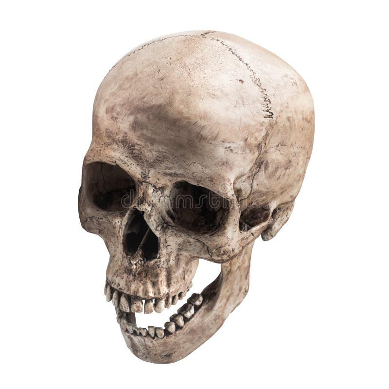 Sidetview ludzkiej czaszki otwarty usta odizolowywający obraz stock