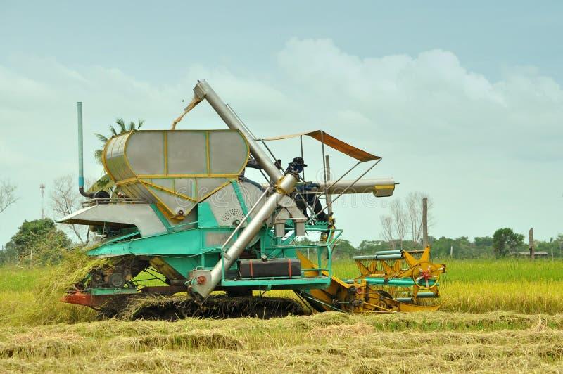 Sideview наемного сельскохозяйственного рабочего рис стоковое изображение rf