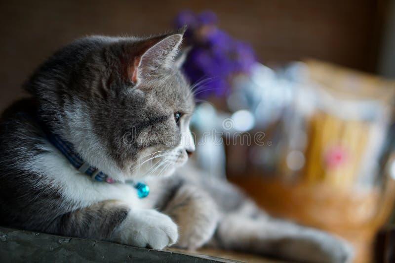 Sideview av katten arkivfoto