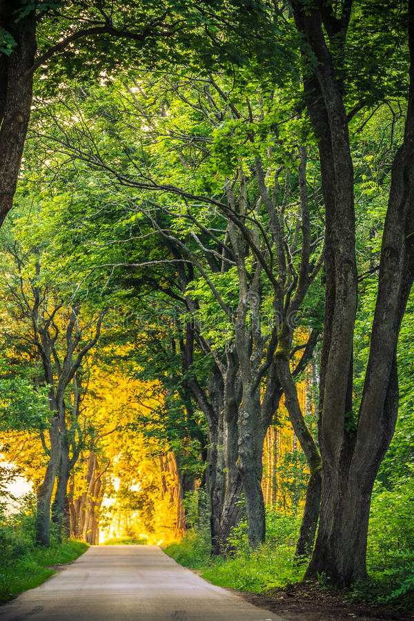 Sidewalk alley path with trees in park. Sidewalk walking pavement alley path with old big trees in park. Beauty nature landscape. Summer walk royalty free stock images