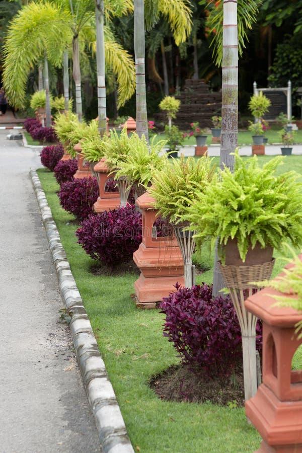 Download Sidewalk In Chiang Mai; Thailand Stock Image - Image of sidewalk, shrub: 21699001
