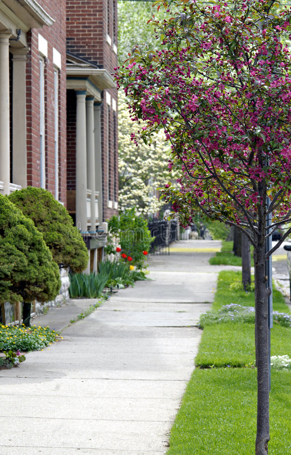 Download Sidewalk With Flowering Trees Stock Photo - Image: 4998052
