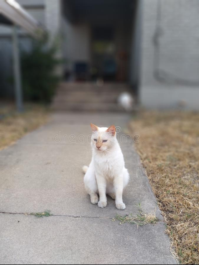 Sidewalk kitty royalty-vrije stock fotografie