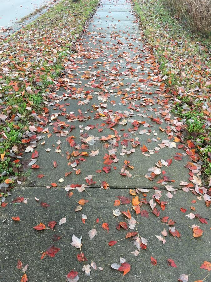 Sidewalk leaf cover. Paved concrete sidewalk covered with scattered colorful fallen autumn leaves royalty free stock photography