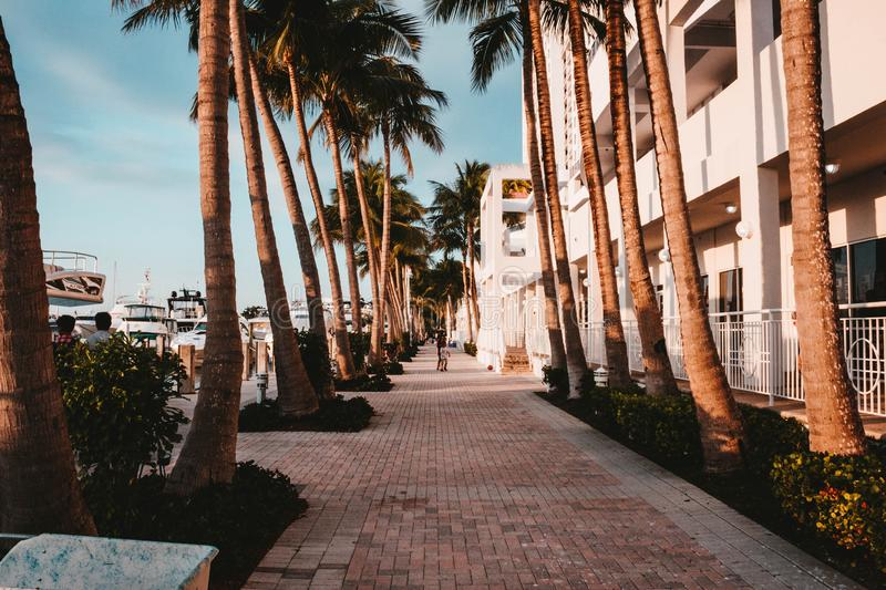 A sidewalk with palm trees royalty free stock photos