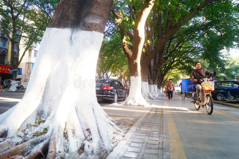 Sidewalk tree roots were painted white lime, safe over winter royalty free stock photo