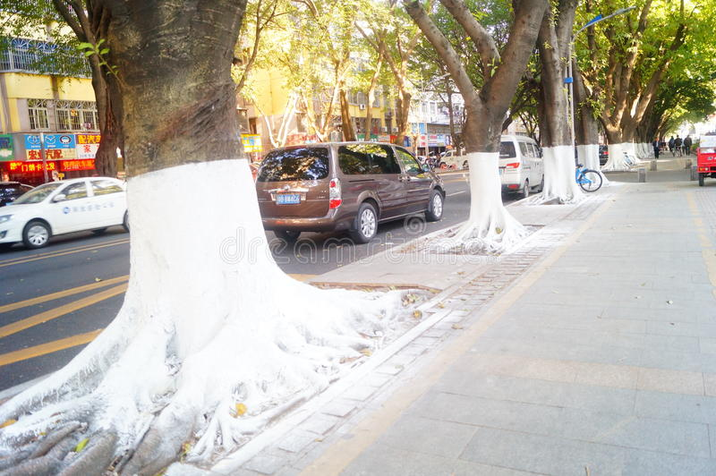 Sidewalk tree roots were painted white lime, safe over winter royalty free stock images