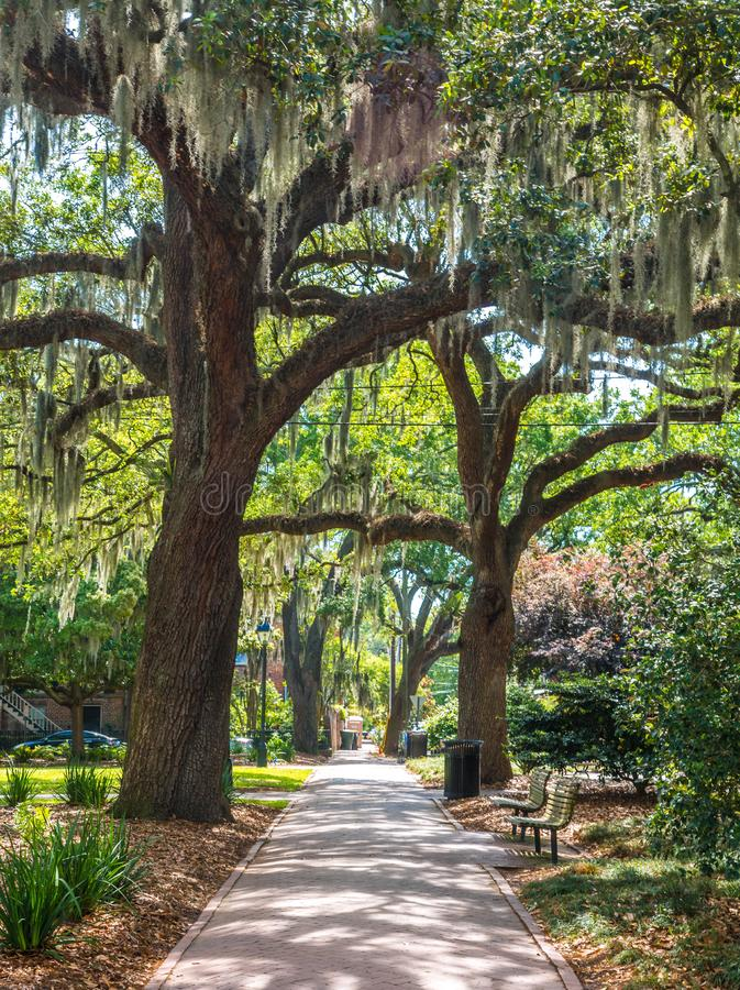 Sidewalk Under Oaks. A sidewalk through a park in Savannah under Live Oak trees stock image