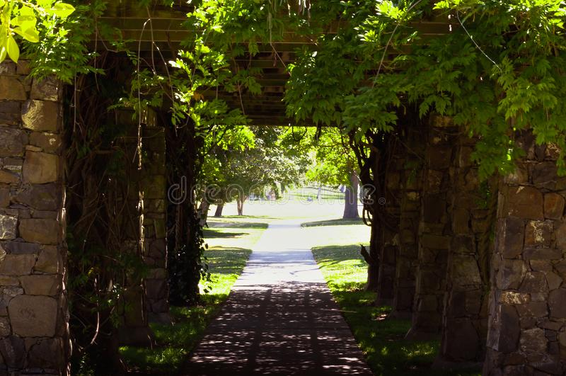 Sidewalk under pergola covered in vines royalty free stock image