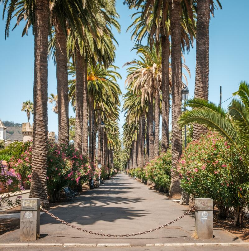Sidewalk walkway under palm trees - palm tree alley way stock images