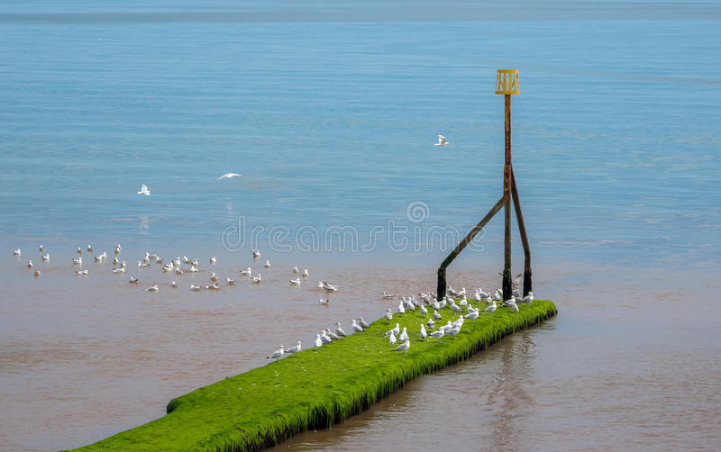Sidmouth, image stock