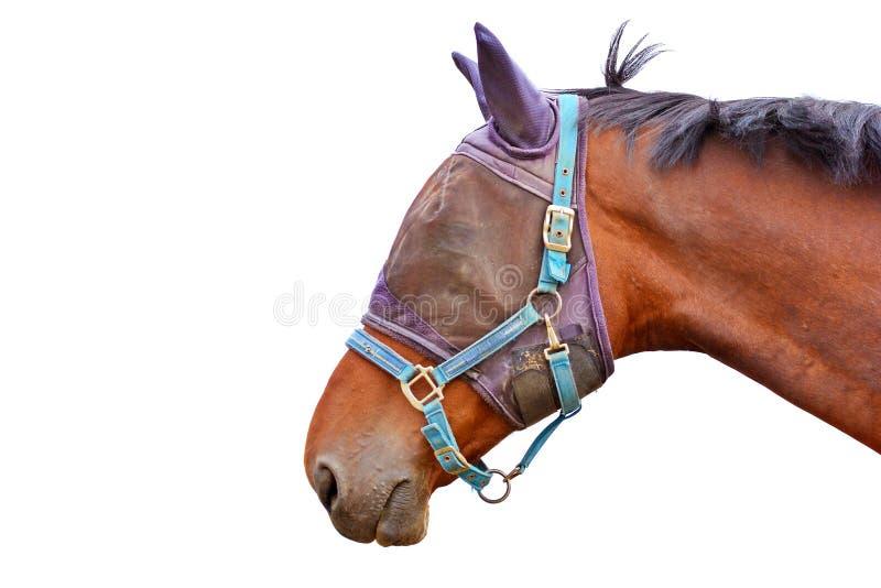 Sidoprofilsikt av ett brunt hästhuvud som bär en krage för för ingreppsflugamaskering och huvud royaltyfri bild