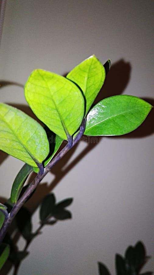 Download Sidor arkivfoto. Bild av natur, green, dekor, leaves - 106837014