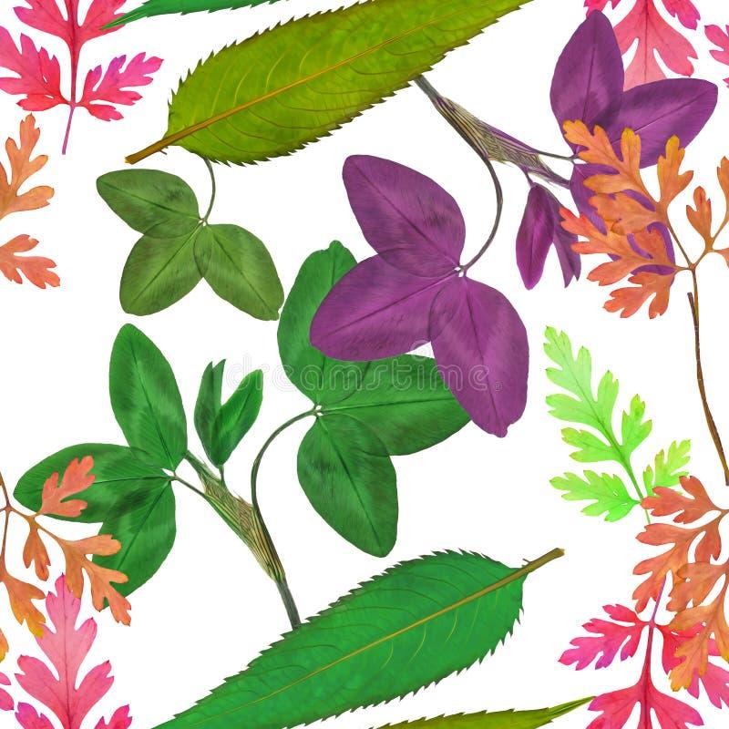 Sidor av örter Sömlös modelltextur av blommor Blom- bac vektor illustrationer