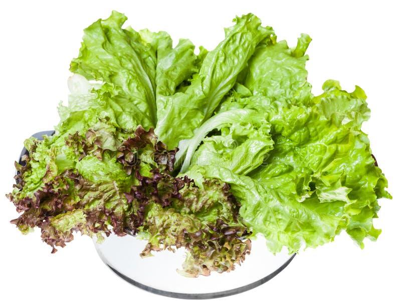 Sidor av den Lollo rossoen och bladgrönsallat i panna fotografering för bildbyråer