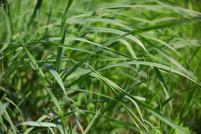 Sidor av gräs på en solig dag, sidosikt arkivfoto