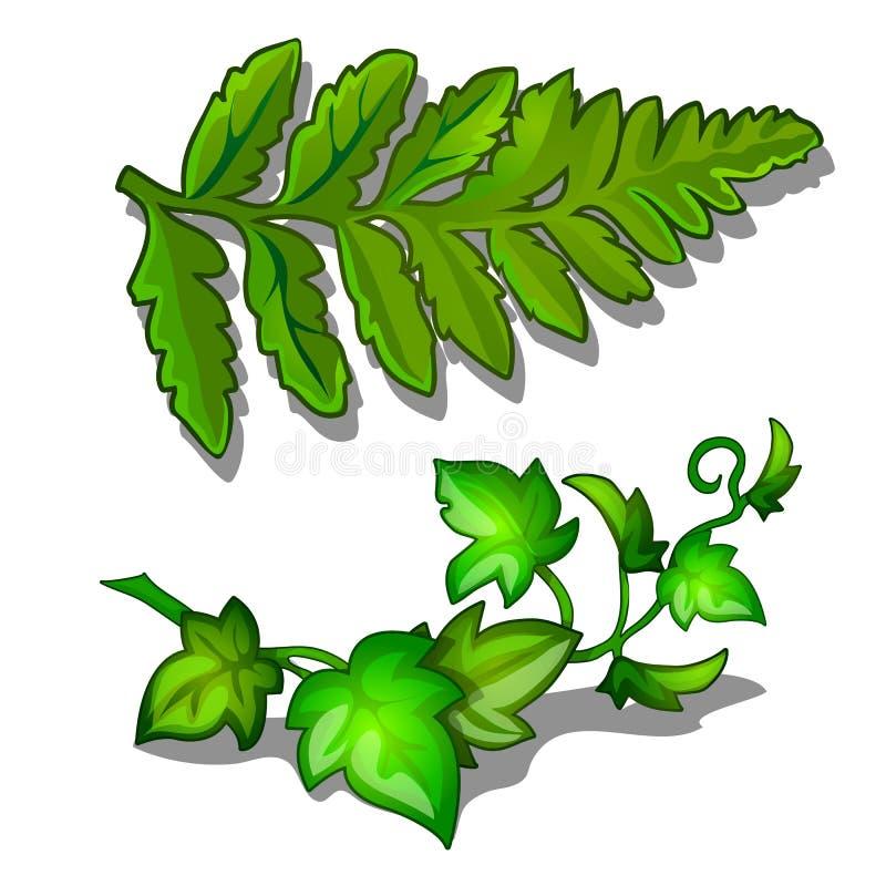 Sidor av ormbunke- och vinrankaväxten som isoleras på vit bakgrund Vektorväxter i tecknad filmstil vektor illustrationer