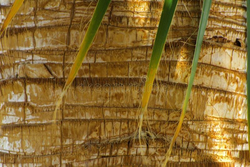 Sidor av palmträd mot skällbakgrunden arkivbilder