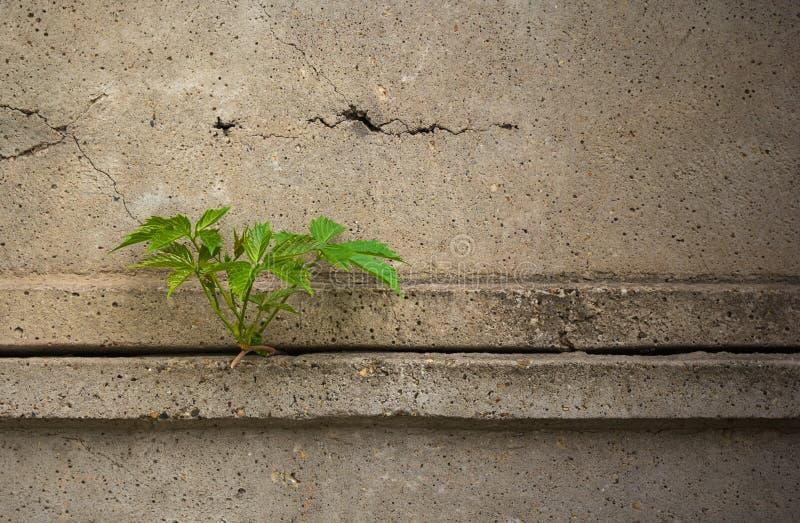 Sidor av växten till och med ett konkret staket Dramatisk look Usefu fotografering för bildbyråer