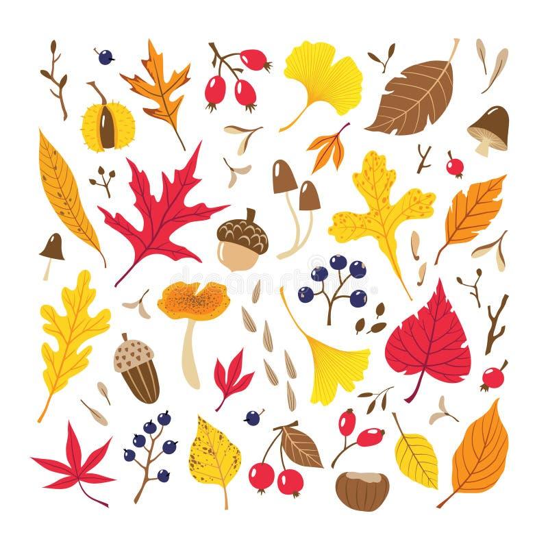 Sidor, bär, frö och champinjoner för nedgång färgrika stock illustrationer