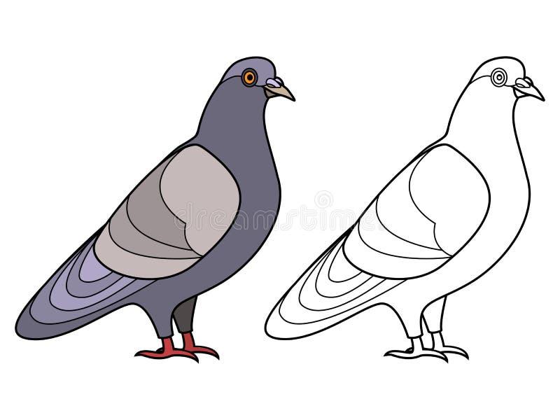 Sidor för duvakonturfärgläggning stock illustrationer