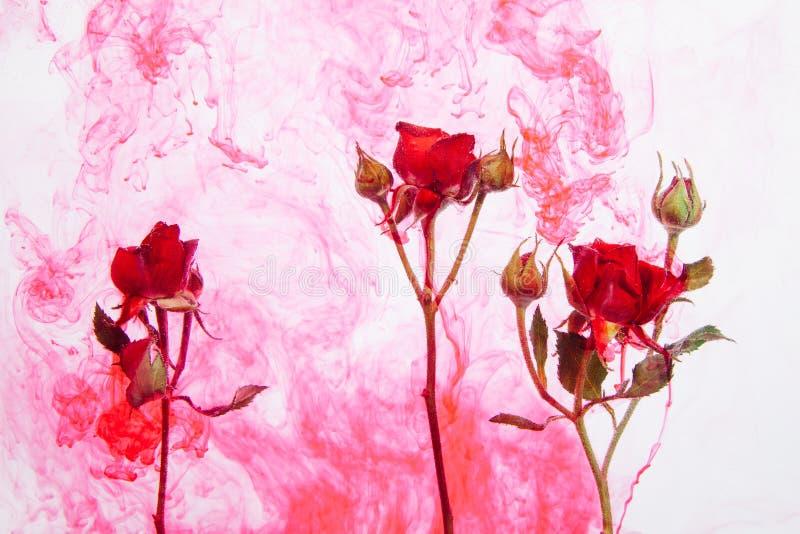 Sidor för rött för ros för abstrakt begrepp för stil för vattenfärg gör grön rosa vitt för bakgrund för akryl för insida för vatt vektor illustrationer