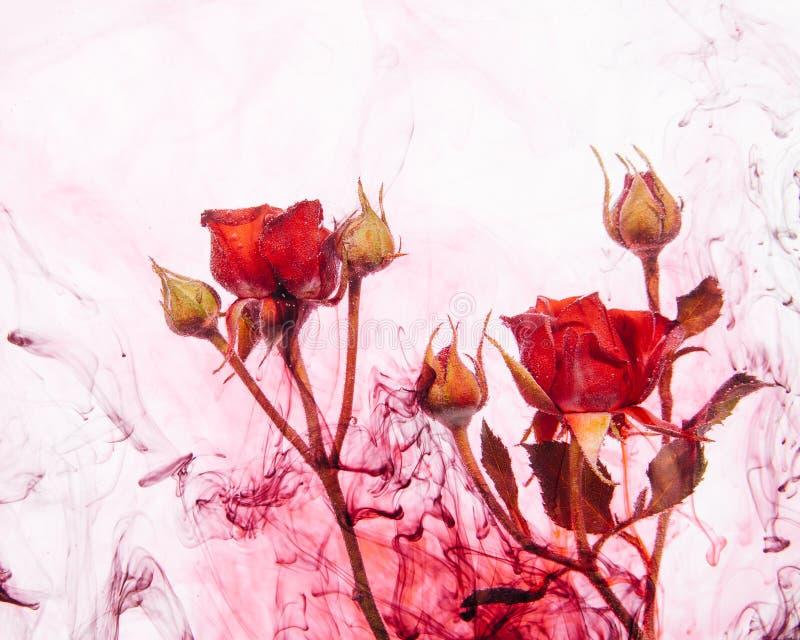 Sidor för rött för ros för abstrakt begrepp för stil för vattenfärg gör grön rosa vitt för bakgrund för akryl för insida för vatt royaltyfri illustrationer