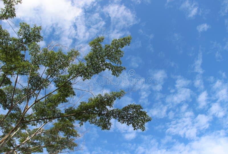 Sidor för träd` s i skogen royaltyfri fotografi