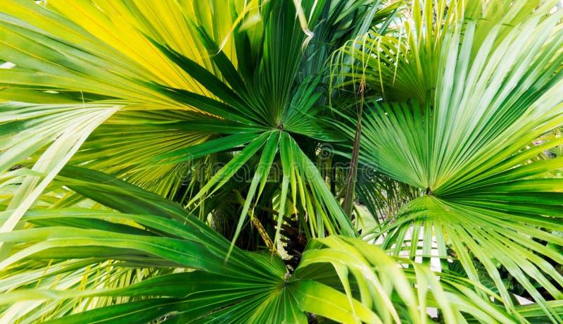 Sidor med långa gröna band i det ljusa solljuset royaltyfri bild
