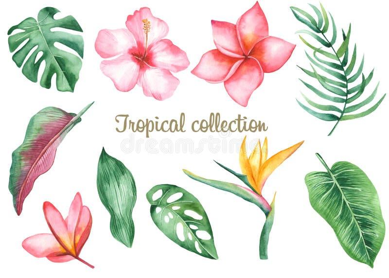 Sidor och blommor för vattenfärg tropiska vektor illustrationer