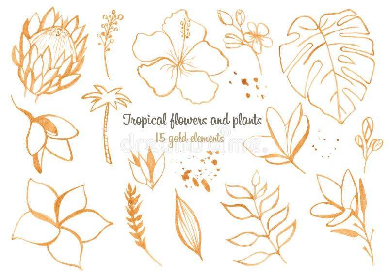 Sidor och blommor för vattenfärg tropiska royaltyfri illustrationer