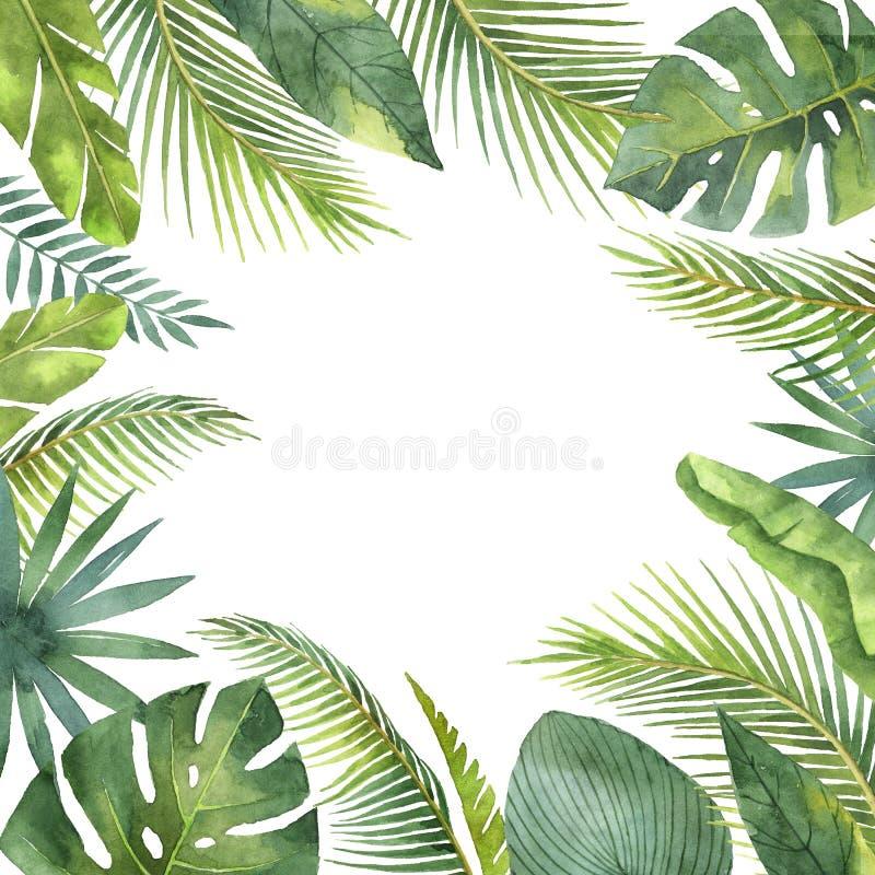 Sidor och filialer för vattenfärgram som tropiska isoleras på vit bakgrund vektor illustrationer