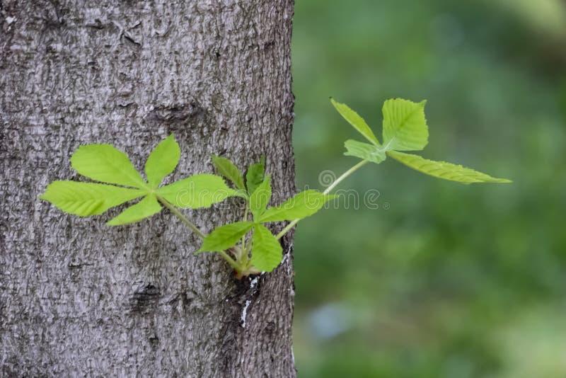 Sidor på trädstammen i natur royaltyfri foto