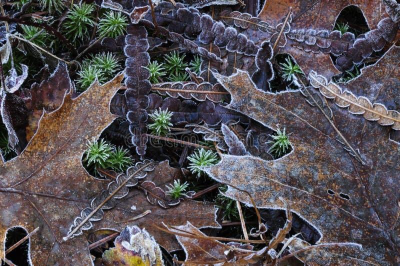 Sidor som täckas med frost på Wilton Park And Preserve, Sarat arkivfoton