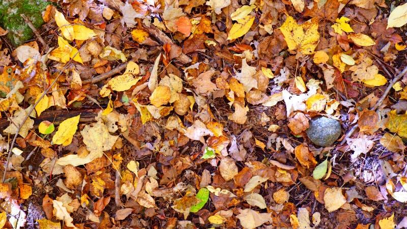 Sidor verkställer färger av hösten arkivbild