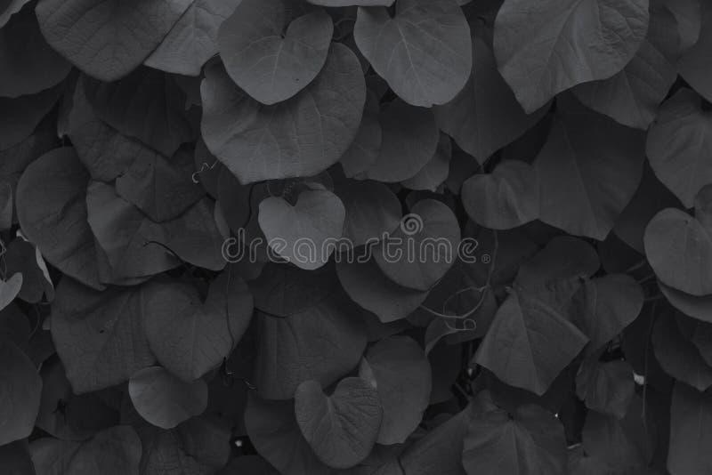 Sidorna av kardborren arkivfoton
