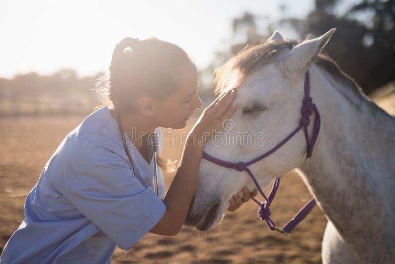 sidosikt av den kvinnliga veterinären som slår hästen royaltyfri bild