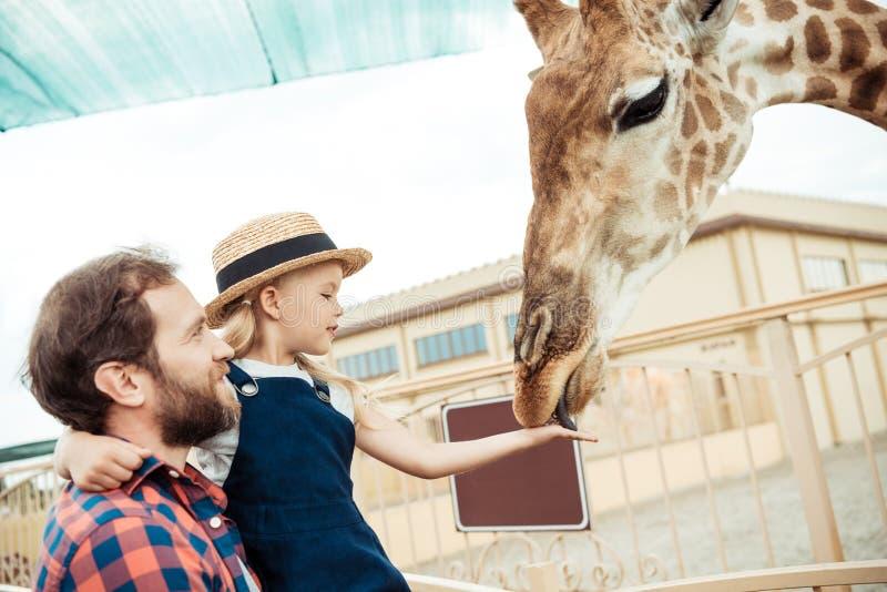 sidosikt av den matande giraffet för fader och för liten dotter arkivbild