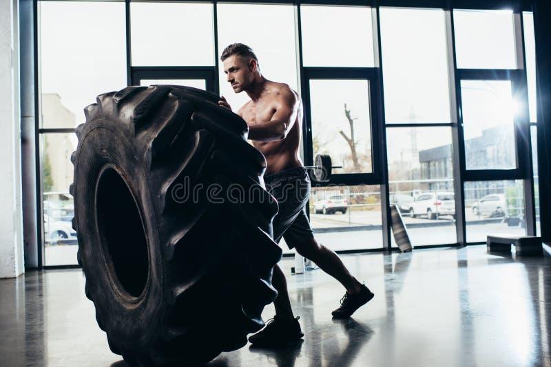 sidosikt av det stiliga shirtless utarbetande och lyftande gummihjulet för idrottsman royaltyfri bild