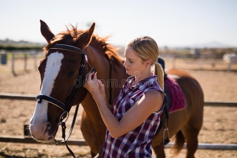 Sidosikt av det unga kvinnliga anseendet vid hästen royaltyfri fotografi