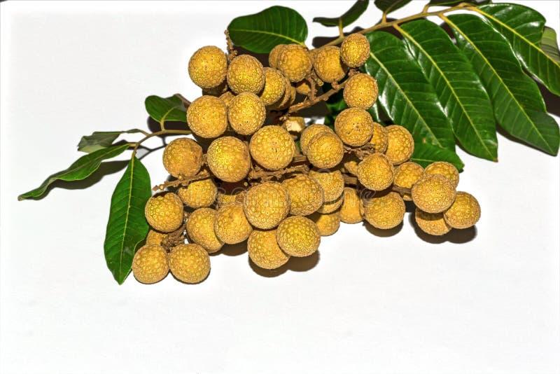 Sidosikt av Dimocarpuslonganen Grupp av Longanfrukter med gröna sidor på vit isolerad bakgrund royaltyfria bilder