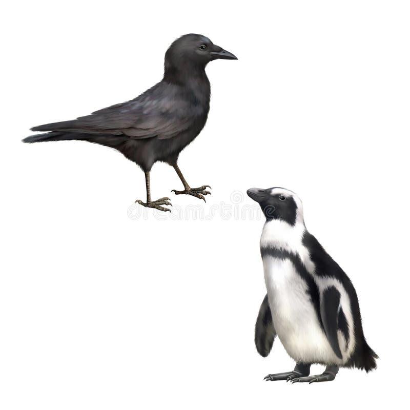 Sidosikt av en Carrion Crow, Corvuscorone, gentoo stock illustrationer