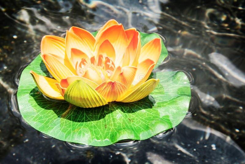 Sidosikt av färgrik lotusblomma på det mörka vattnet fotografering för bildbyråer