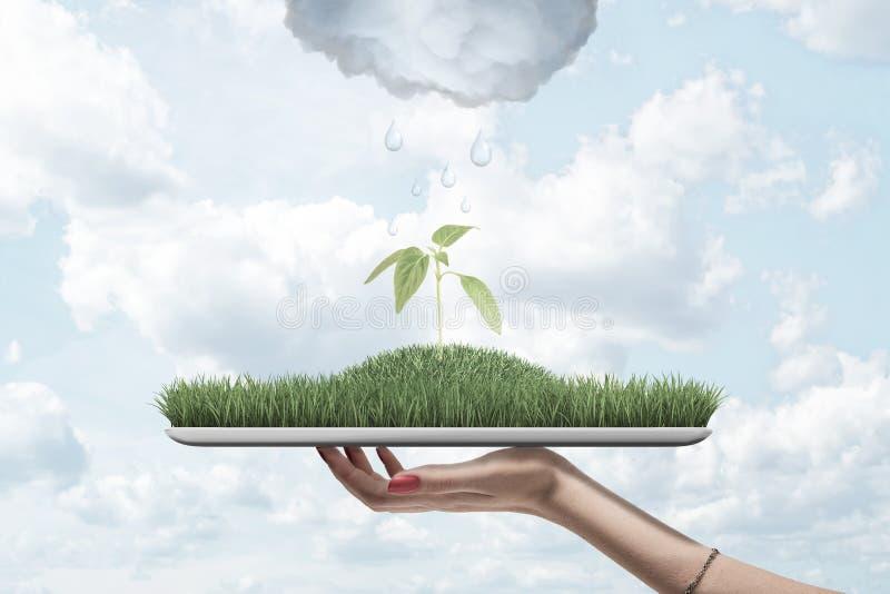 Sidosikt av kvinnas minnestavlan för handinnehav med grönt gräs överst med den gröna grodden i mitt med att regna molnet över arkivfoto
