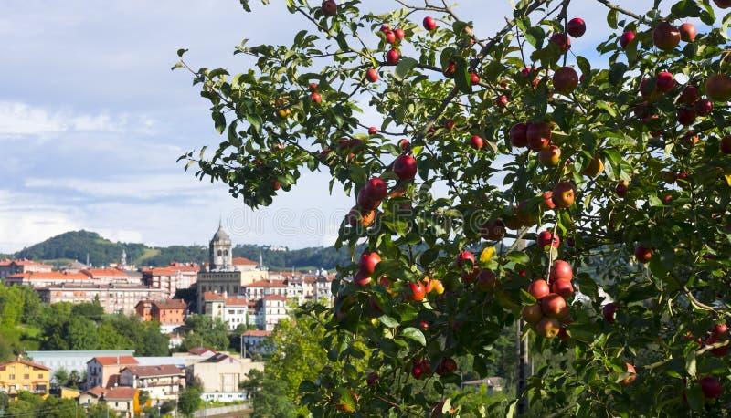 Sidra do producir de Manzanas para imagem de stock